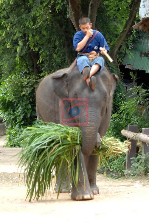 Thailand Tour.<br /> Maese Elephant Camp, Chiang Mai.