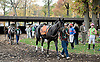 Costal Sunrise before The Xtra Heat Stakes at Delaware Park on 10/27/12..