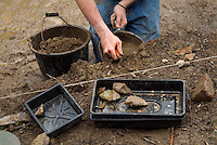 SAVEOCK WATER, CORNWALL, ENGLAND - AUGUST 03: A close up of stone tools in finds tray, August 3, 2008 in Saveock Water, Cornwall, England. Archaeologist Jacqui Wood is leading the excavation here. (Photo by Manuel Cohen)