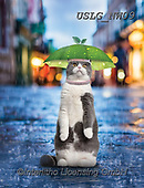 PAUL,REALISTIC ANIMALS, REALISTISCHE TIERE, ANIMALES REALISTICOS, paintings+++++NW_Fruit-Cat-H,USLGNW09,#a#, EVERYDAY ,funny photos