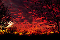Altocumulus clouds with fall streaks turn a fiery red at sunset over Richardson Texas.