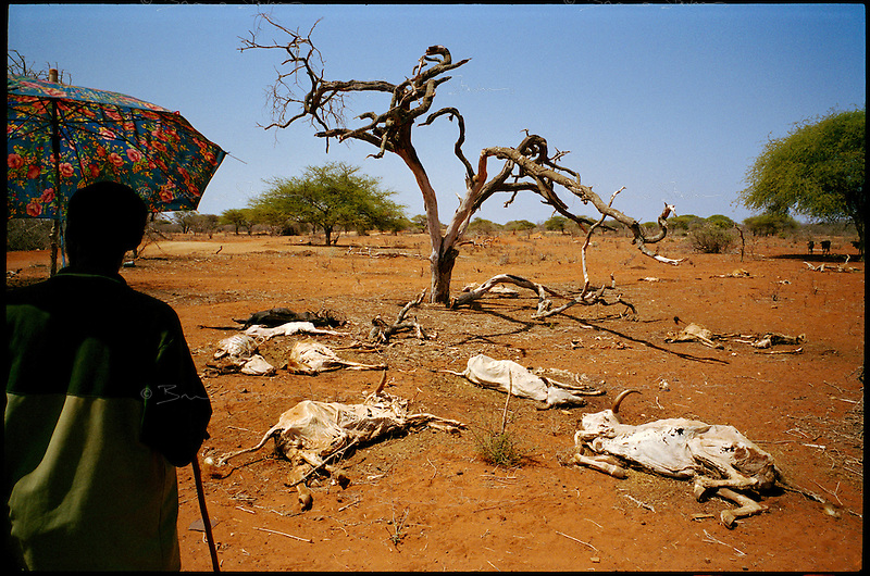 El Ram, NE Kenya, March 2006.Thousands of cattle, goats and camel carcasses litter the bush. More than 4 millions people are affected in the region by the worst drought in man's memory. The livestock is decimated and a whole lifestyle threatened.