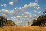 Clouds from a passing autumn storm pass by the oaks in the Sierra Nevada Foothills of Amador County, Calif.