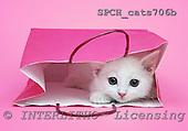 Xavier, ANIMALS, cats, photos, SPCHCATS706B,#A# Katzen, gatos