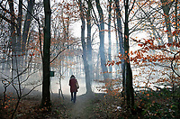 Nederland - Arnhem  - 17 december 2017.  Boswandeling.  Foto Berlinda van Dam / Hollandse Hoogte.