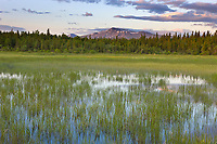 Wetland grasses and Mount Katolinat, Katmai National Park, southwest, Alaska.