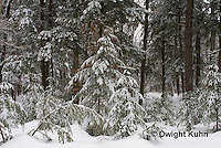 WT05-510z  Maine forest scene with snow cover