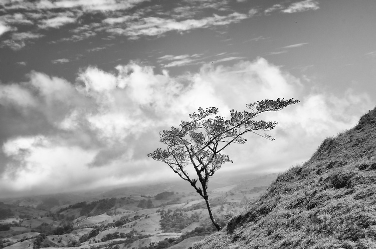 Black & white fine art photo tree