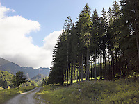 FOREST_LOCATION_90003