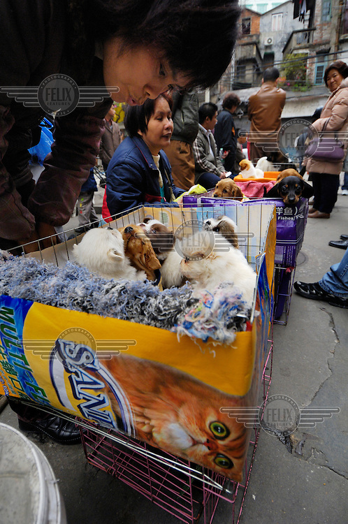 Puppies are sold from a recycled cat food box on a street corner close to where dogs used to be sold for food in Qingping Market. Pets are becoming more and more popular amongst China's middle class.