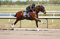 #117Fasig-Tipton Florida Sale,Under Tack Show. Palm Meadows Florida 03-23-2012 Arron Haggart/Eclipse Sportswire.