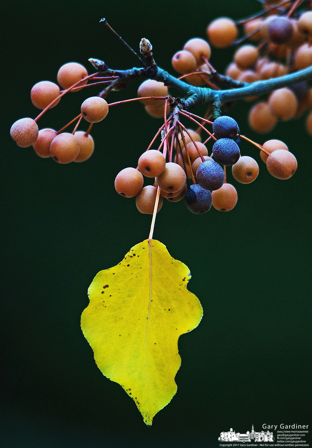 A single yellow leaf dangles from a branch.<br />