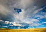 Eastern steppe, Mongolia