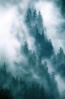 Aerial view of mist rising over an evergreen forest. Alaska.