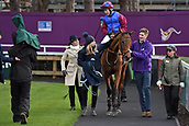 3rd February 2019, Leopardstown, Dublin, Ireland;La Bague au Roi with Richard Johnson up after winning the Flogas Novice Chase. Leopardstown racecourse.