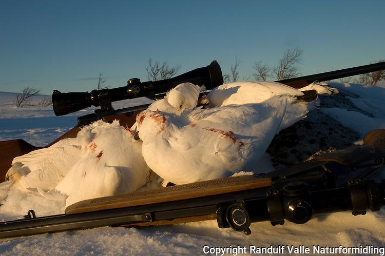Rypefangst tatt med rifle og kombivåpen ---- Catch of grouse in winter