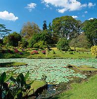 Sri Lanka, Peradeniya near Kandy: Kandy Botanical Gardens | Sri Lanka, Peradeniya bei Kandy: Kandy Botanical Gardens