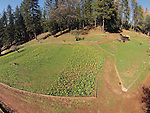 Daffodil Hill in spring from low-level quadcopter flight