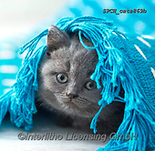 Xavier, ANIMALS, REALISTISCHE TIERE, ANIMALES REALISTICOS, cats, photos+++++,SPCHCATS869B,#a#, EVERYDAY