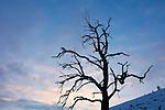Baum, Bäume, Baumstamm, Baumstämme, Botanik, Flora, Holzstamm, Holzstämme, Lebewesen, Natur, Pflanze, Pflanzen, Totholz, Vegetation, botanic, botany, living being, log, log booms, logs, nature, plant, plants, tree, tree trunk, trees, dying of trees, Skeleton of Tree, Baumskelett, Baumsterben, Darstellungen, Kontur, Konturen, Profil, Profile, Schattenriß, Silhouette, Silhouetten, presentation, presentations, dusk, elements, evening skies, evening sky, Landscape, twilight, Abend, Abenddämmerung, Abendhimmel, abendrot, blaue Stunde, Landschaft, Naturelemente, Jahreszeit, Jahreszeiten, Kälte, Winter, season, seasons, Wolke, Wolken, cloud, clouds, Mauren, Liechtenstein