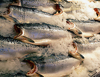 Silver Salmon fish at Pike's Market. Seattle, Washington