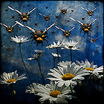 Even bees can be protective of their favorite bunch of daisies.