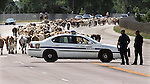 MICHAEL SMITH/WTE..Two Cheyenne police officers watch cattle move onto Central Avenue in Cheyenne Sunday morning.  Over 700 head of Corriente long horned steers were part of the 2 mile long cattle drive along I-25 to support the Frontier Days Rodeo...