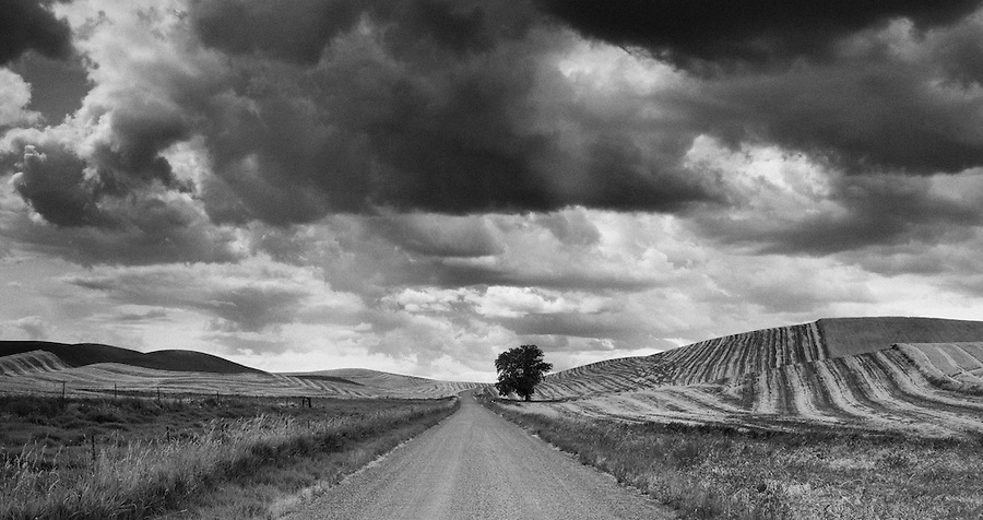 A lonely road trails off into the hills with a tree on one side and storm clouds on the horizon.
