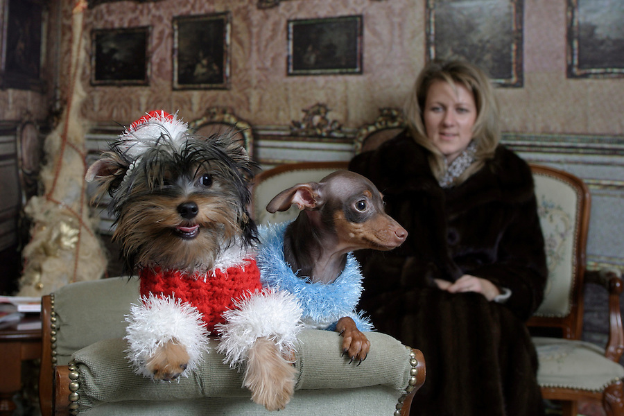 Moscow, Russia, 23/11/2003..Dogs and their owners at the upmarket Milord Dog Salon, which features a line in winter coats for dogs. Yorkshire terrier Dobbie dressed  as Ded Moroz [Santa Claus] and toy terrier Vitas as Snegurochka [the Snow Maiden] with Dobbie's owner Alla Sheyanova.