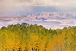 The a fall storm over the Canyonlands in the distance over aspen trees in fall color on the La Sal Mountains near Moab, Utah, USA.