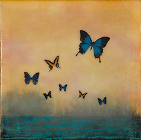 Butterfly photo transfer over mixed media encaustic painting. SOLD