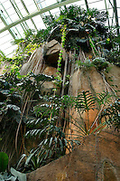 Tropical Rainforest Glasshouse (formerly Le Jardin d'Hiver or Winter Gardens), 1936, René Berger, Jardin des Plantes, Museum National d'Histoire Naturelle, Paris, France. Low angle view of the cave against the glass and metal roof structure of the Art Deco style glasshouse.