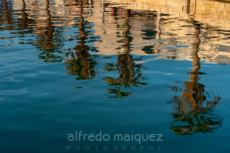 Palms reflexion on sea, Alicante city, Alicante province,Spain.