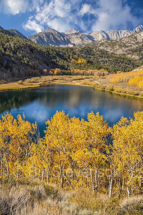 An image of yellow aspen trees reflecting in North Lake in the Sierra mountains, CA. You can drive to North Lake at about 10,000 feet. It is a very popular fishing and camping spot.