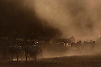 "Morning fog and dust cast a mystical scene on horses at the Wild Horse Sanctuary.<br /> Dianne Nelson has saved mustangs on a ranch in northern California.  ""It was in 1978 that the Wild Horse Sanctuary founders rounded up almost 300 wild horses for the Forest Service in Modoc County, California. Of those 300, 80 were found to be un-adoptable and were scheduled to be destroyed at a government holding facility near Tule Lake, California. The Sanctuary is located near Shingletown, California on 5,000 acres of lush lava rock-strewn mountain meadow and forest land. Black Butte is to the west and towering Mt. Lassen is to the east.<br /> Their goals:.Increase public awareness of the genetic, biological, and social value of America's wild horses through pack trips on the sanctuary, publications, mass media, and public outreach programs.<br /> Continue to develop a working, replicable model for the proper and responsible management of wild horses in their natural habitat..Demonstrate that wild horses can co-exist on the open range in ecological balance with many diverse species of wildlife, including black bear, bobcat, mountain lion, wild turkeys, badger, and gray fox.<br /> Collaborate with research projects in order to document the intricate and unique social structure, biology, reversible fertility control, and native intelligence of the wild horse."