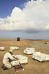 Bee hives in the Negev
