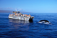 A humpback whale does a fluke up dive in front of the Ocean Exploer, one of the Pacific Whale Foundation's boats.