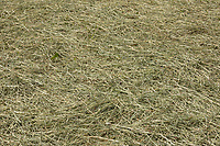 22.5.2020 Haylage <br /> ©Tim Scrivener Photographer 07850 303986<br />      ....Covering Agriculture In The UK....