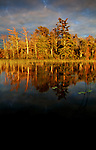 Setting sun creates a golden shore on English Lake in northern Wisconsin.