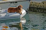 K-9 Boater