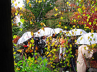 Butchardt Gardens, Victoria, Vancouver Island, BC