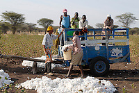 Tanzania Shinyanga, cotton farming, farmer harvest cotton and load it on a wagon