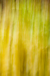 Backgrond image with flowers, grasses, foliage, movement<br />