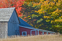 An old barn and lean to are surrounded by autumn foliage in Door County, Wisconsin