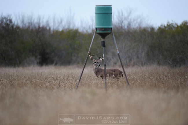 WHITE-TAILED DEER HUNTING..Hunting in Webb County Texas Sombrerito Ranch.Craig Nyhus shoots his first white-tailed deer 8 point scored 122 B&C.