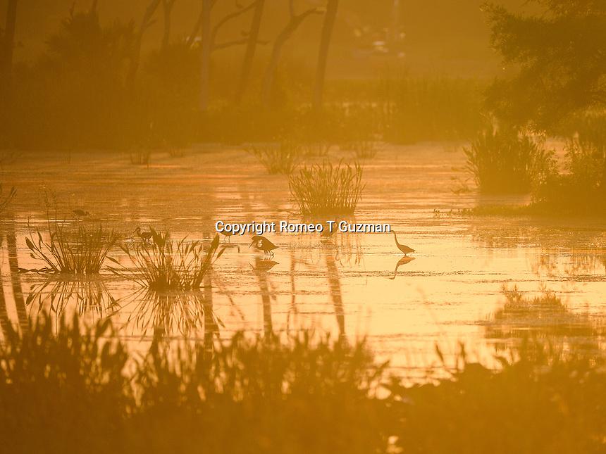 June 8, 2014: Sunrise Orlando Wetlands Park Christmas, FL