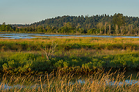 Nisqually River delta/estuary at Billy Frank Jr. Nisqually National Wildlife Refuge, WA.  July.  Evening at high tide.