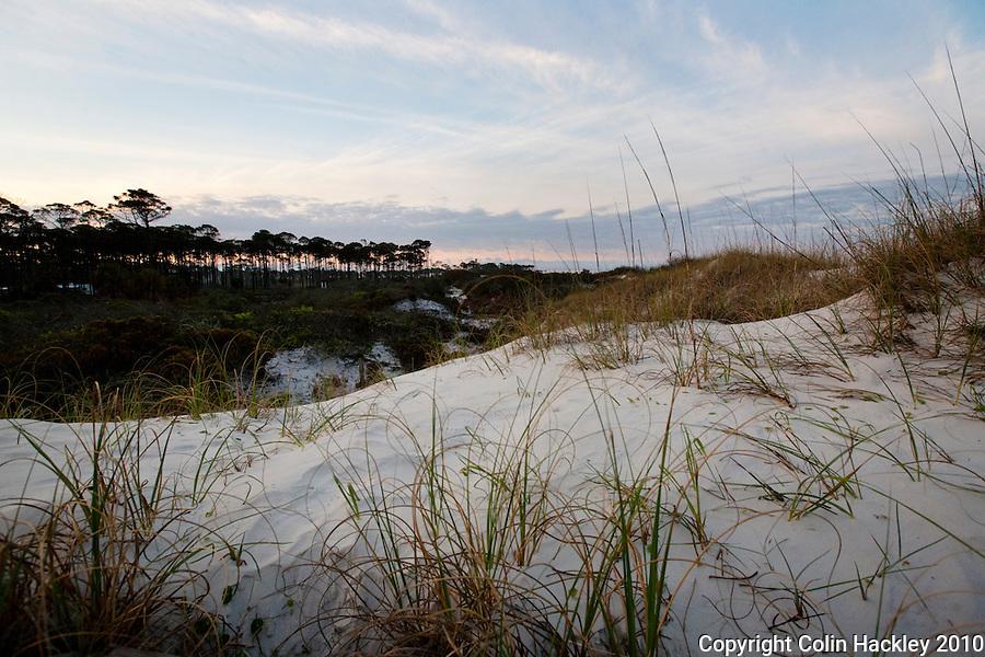 CAPE SAN BLAS, FLA. 2/17/10-CAPESB021710 CH10-Sand dunes at Cape San Blas...COLIN HACKLEY PHOTO