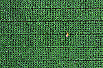 Aerials of cabbage patch workers by Abdul Momin