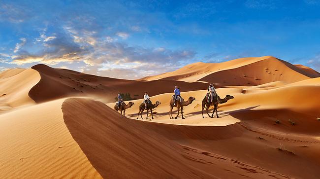 Camels rides amongst the Sahara sand dunes of erg Chebbi, Morocco, Africa
